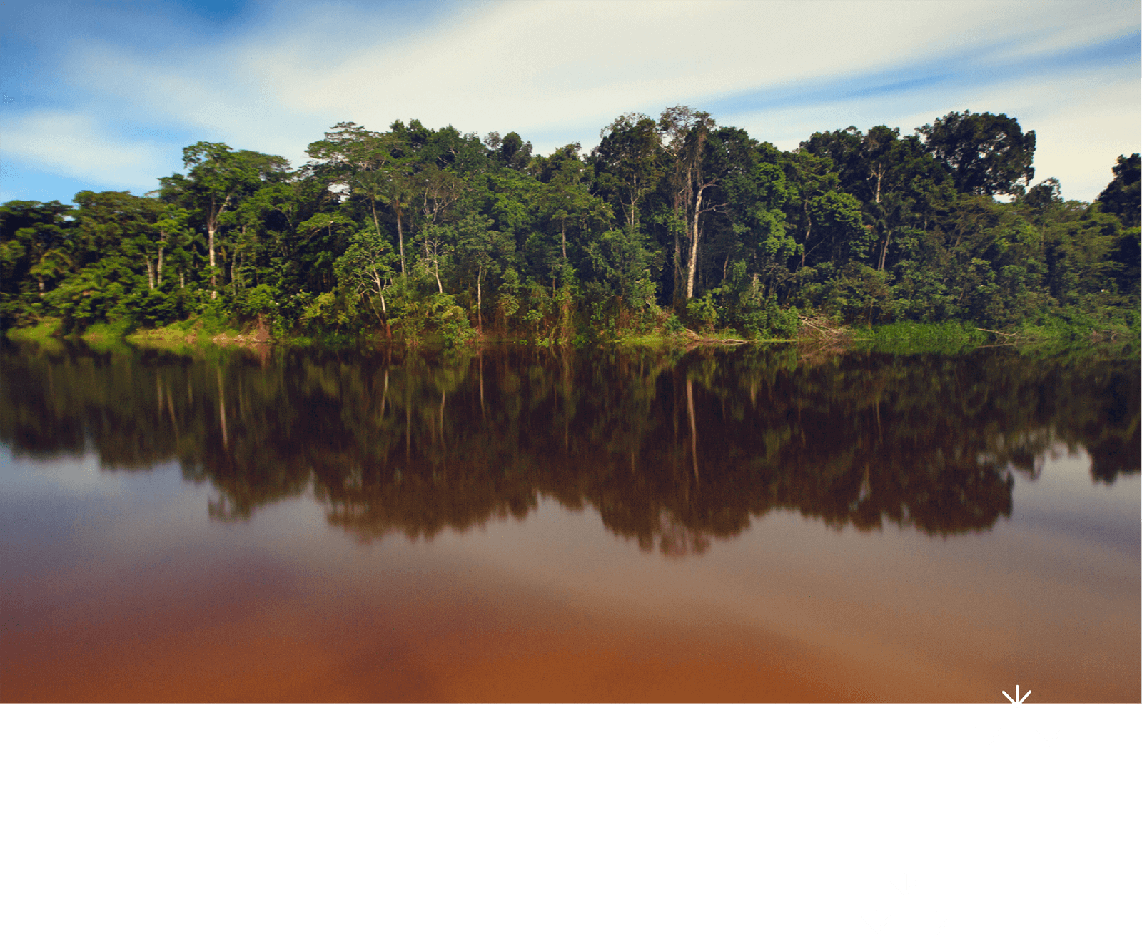 アマゾンの熱帯雨林に出会う。