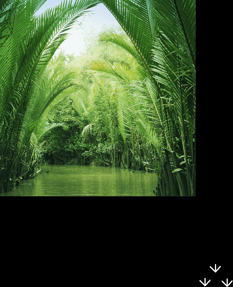 不思議な生きものと出会うオセアニア・アジアの水辺